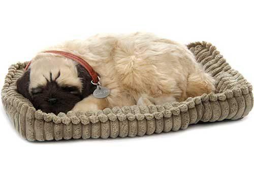 perfect-petzzz-pug